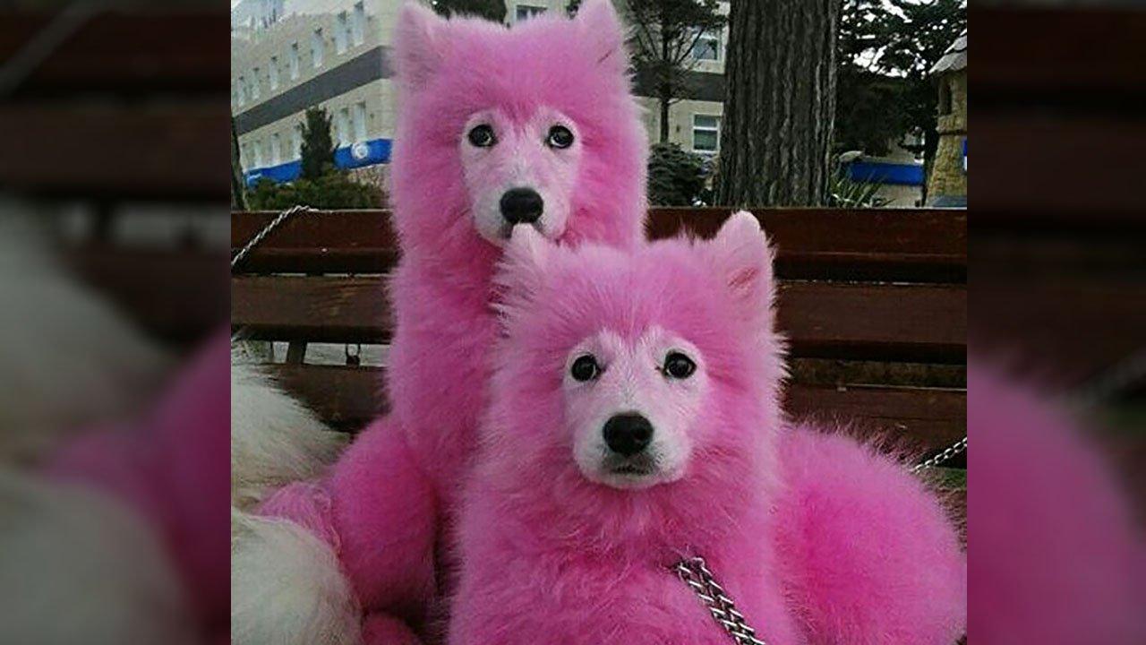 犬のカラーリング