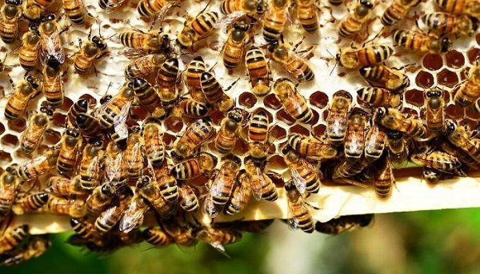 蜂に刺されて死んだ男性