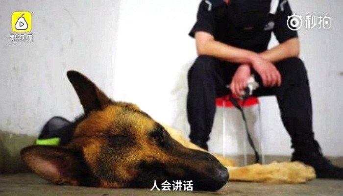 過労でウトウトする警察犬