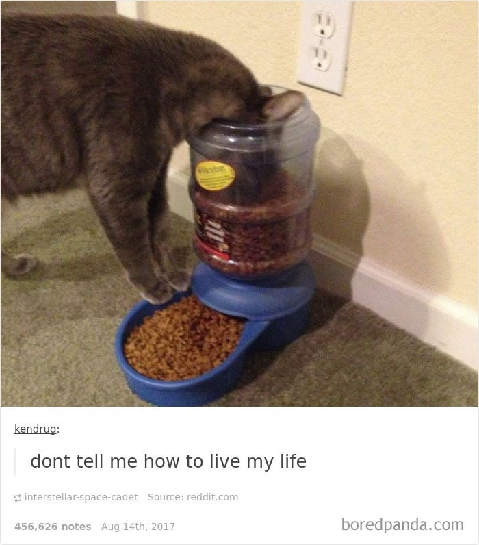 Cute Cats Post On Tumblr That Impossible Not To Laugh At - 24 tumblr posts about dogs that are impossible not to laugh at