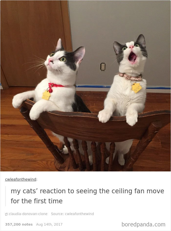 Cute Cats Post On Tumblr That Impossible Not To Laugh At - 20 cat posts on tumblr that are impossible not to laugh at
