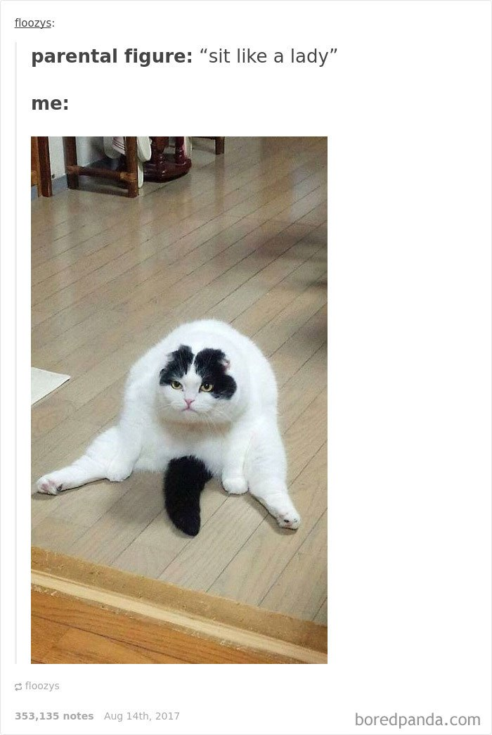 Cute Cats Post On Tumblr That Impossible Not To Laugh At - 45 tumblr posts about animals that are impossible not to laugh at