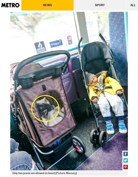 猫のせいでベビーカーを載せなかった母親