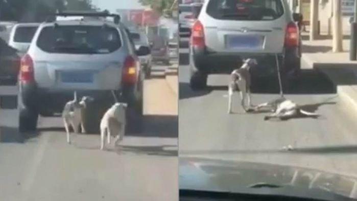車に犬をくくって走行