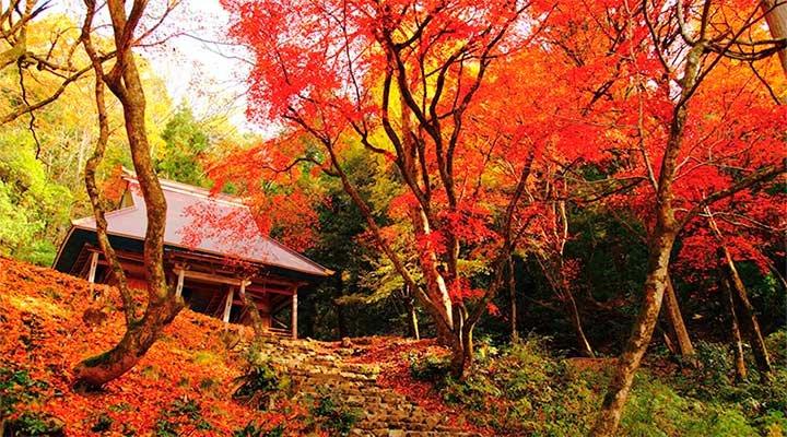 大原三千院 紅葉