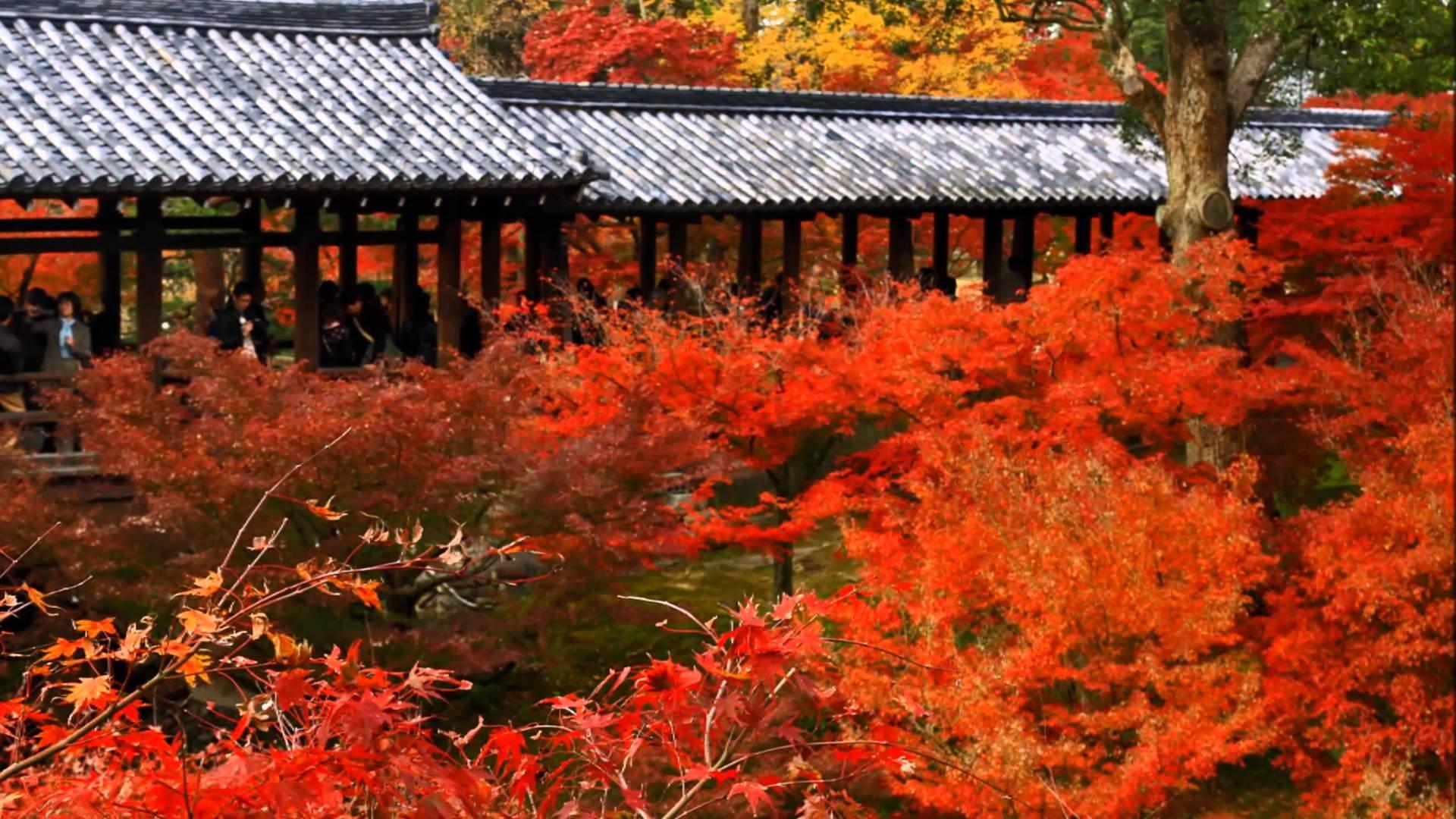 大本山東福寺 紅葉