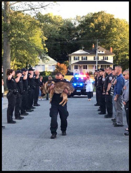 敬礼される警察犬