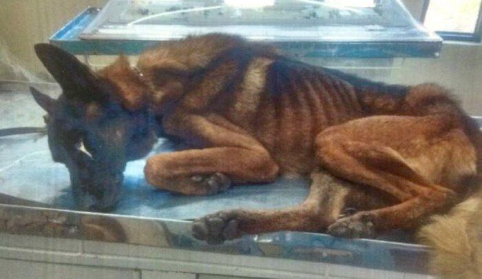 放置されたガリガリの警察犬