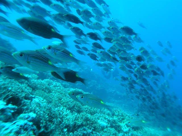 「魚 群れ」の画像検索結果