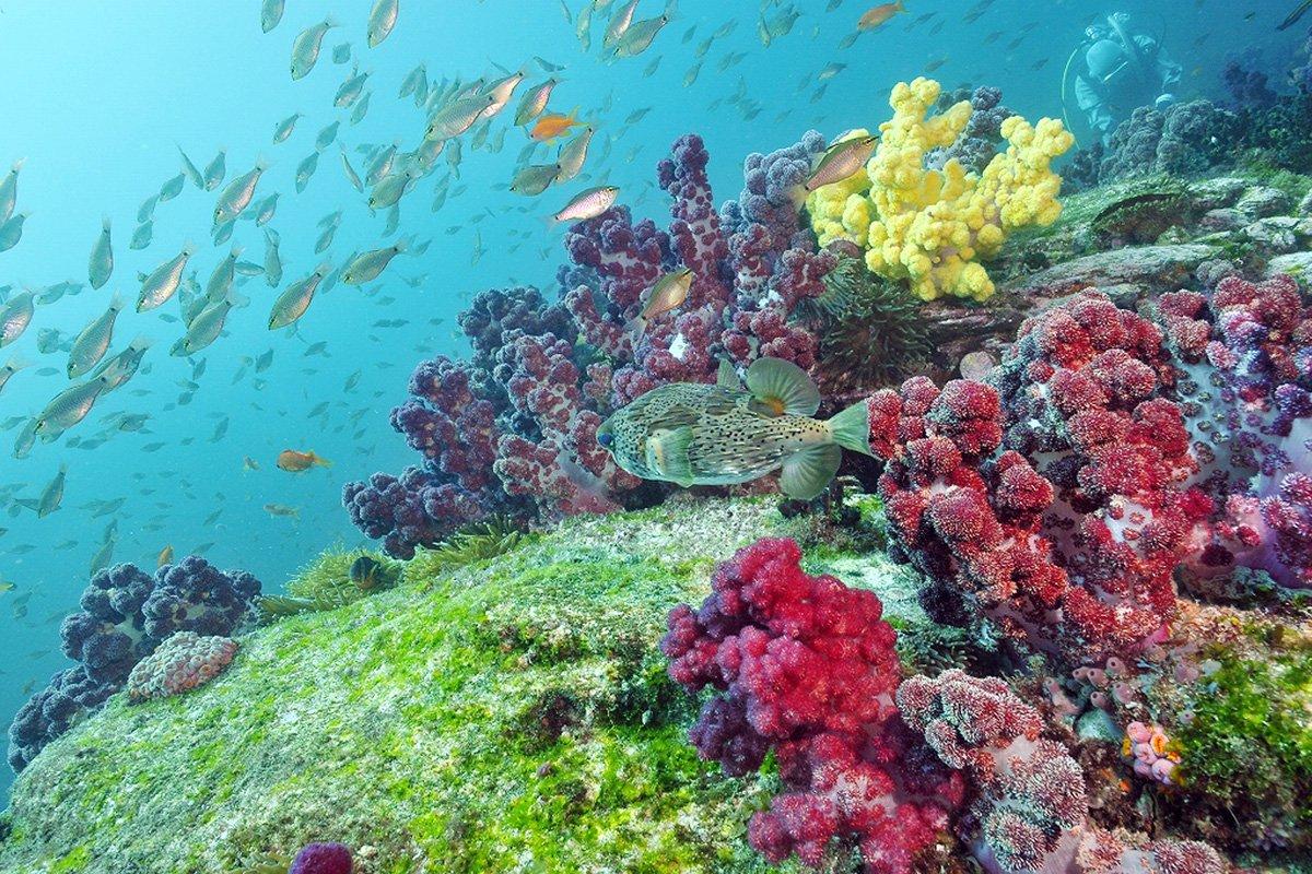 「サンゴ礁」の画像検索結果