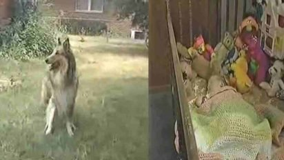 lassie saves baby 412x232.jpg?resize=412,232 - Dog Won't Stop Barking, Mother Realized Her Daughter Was In Danger