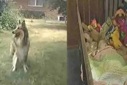 lassie saves baby 412x275.jpg?resize=412,275 - Dog Won't Stop Barking, Mother Realized Her Daughter Was In Danger