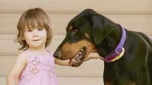 doberman-tosses-toddler