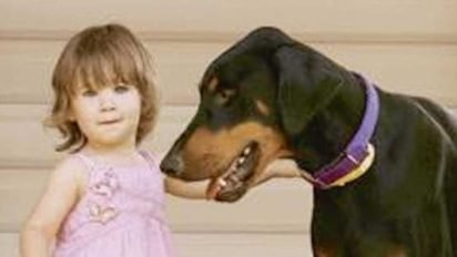 doberman tosses toddler 1 412x232.jpg?resize=412,232 - Family Dog Grabbed Their Toddler And Tossed It Away To Protect It From Predator