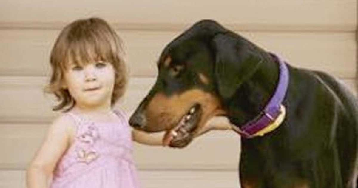 doberman tosses toddler 1.jpg?resize=1200,630 - Her Dog Suddenly Grabs Her Out of Nowhere And Tosses Her Across The Yard. Then THIS Happens!