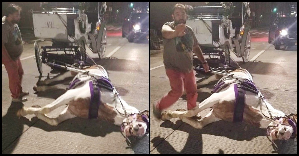 horse.jpg?resize=300,169 - What This Eyewitness Photographs About New York Carriages Will Shock You!