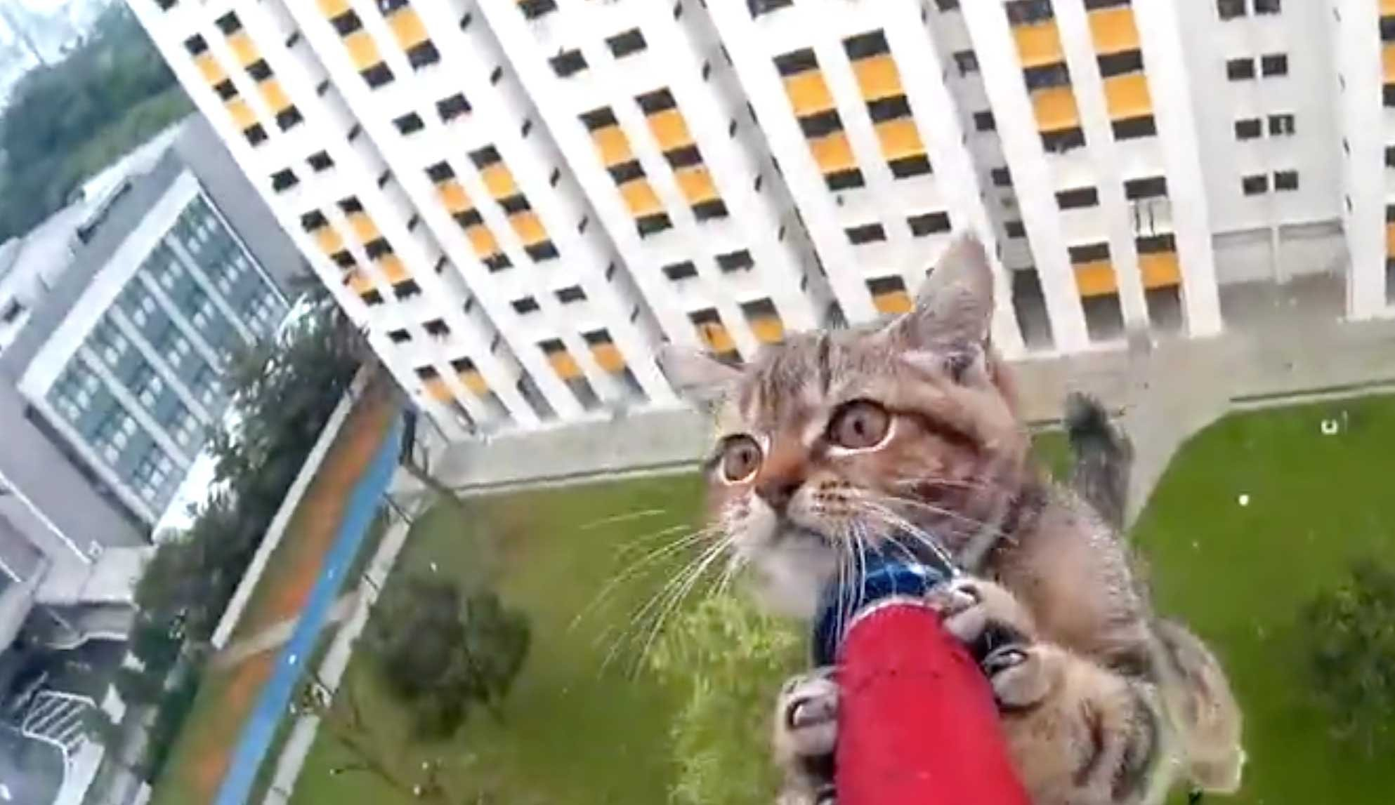 kittensavedfromledge.jpg?resize=412,232 - Helpless Kitten Stranded On A Ledge Was Saved By Rescue Officer
