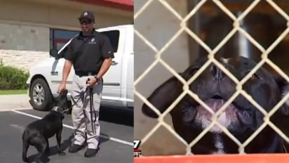 local cops save pitbulls 412x232.jpg?resize=412,232 - Cops Are Adopting Pit Bulls And Training Them As K-9 Dogs