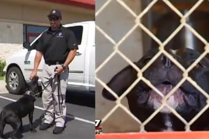 local cops save pitbulls 412x275.jpg?resize=412,275 - Cops Are Adopting Pit Bulls And Training Them As K-9 Dogs