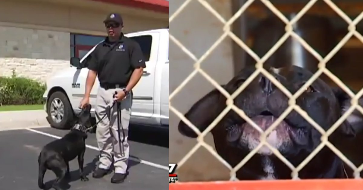 local cops save pitbulls.jpg?resize=1200,630 - Cops Are Adopting Pit Bulls And Training Them As K-9 Dogs