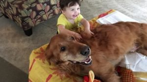 mav 7 850x637 e1478239861686 300x169 - Lowe's Employee Changes Life Of Lovable Dog Dying Of Cancer