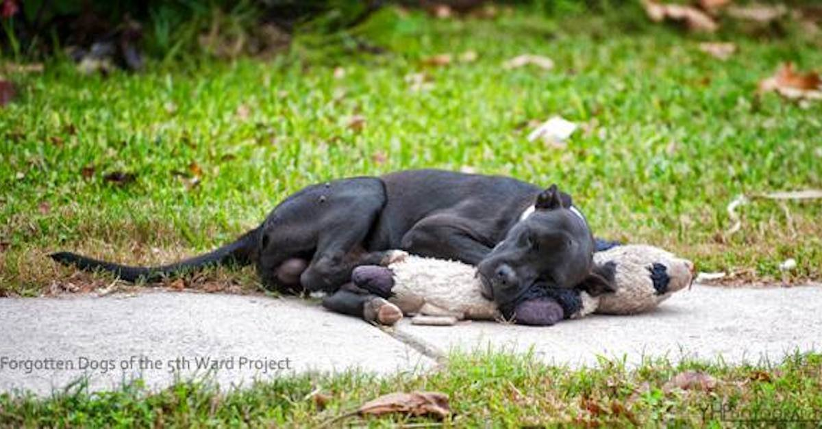 3 24 5 A - Heartbreaking Photo Of A Homeless Dog Is Going Viral