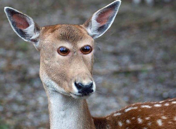 animal-eyes-1-600x439