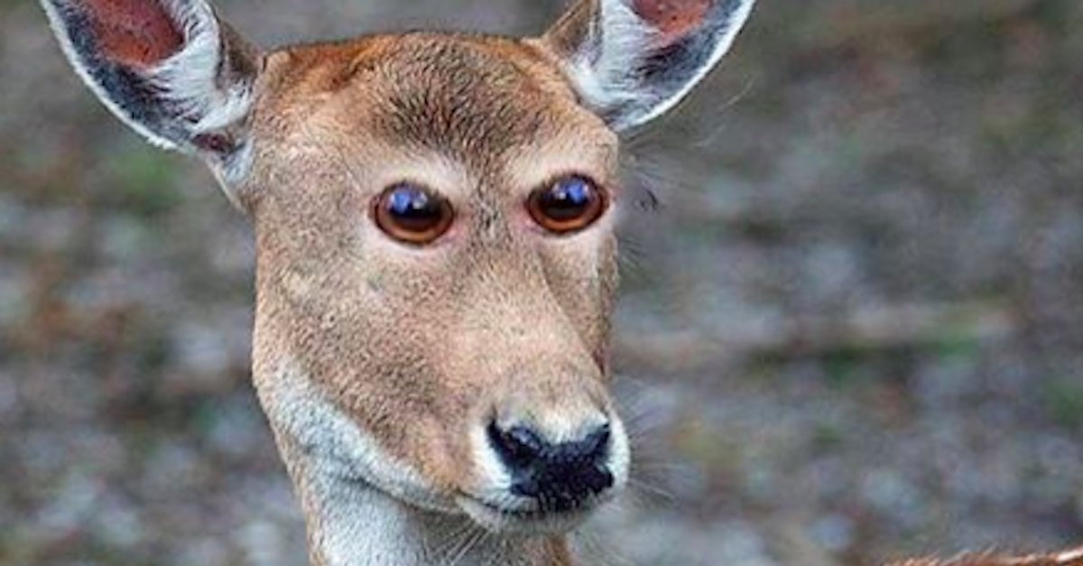 Animal Eyes A 1.jpg?resize=412,232 - How Animals Would Look Like If Their Eyes At The Front