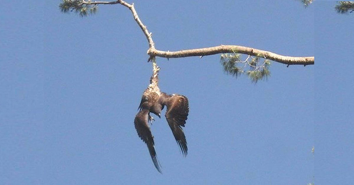 CmewwsAWEAAFHsj copy.jpg?resize=412,232 - Army Veteran Rescued Eagle Stranded On Tree Limb 70 Feet From The Ground