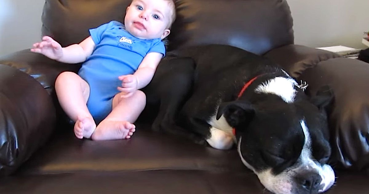 Screen Shot 2016 04 17 at 10.jpg?resize=1200,630 - Adorable Baby Pooped In His Diaper, Dog's Reaction Is Winning The Internet!
