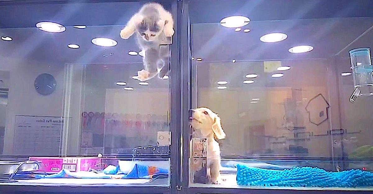 Screen Shot 2016 06 29 at 71.jpg?resize=412,232 - Cat And Dog In Pet Store Caught Playing With Each Other On Security Camera