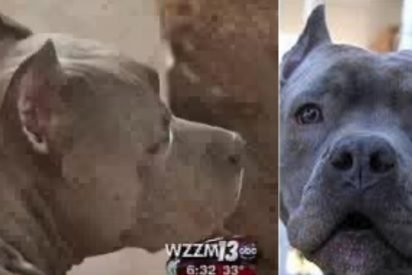 blitz saves woman 412x275.jpg?resize=412,275 - Pit Bull Ran Out Of House To Save Neighbor Who Was Screaming For Help