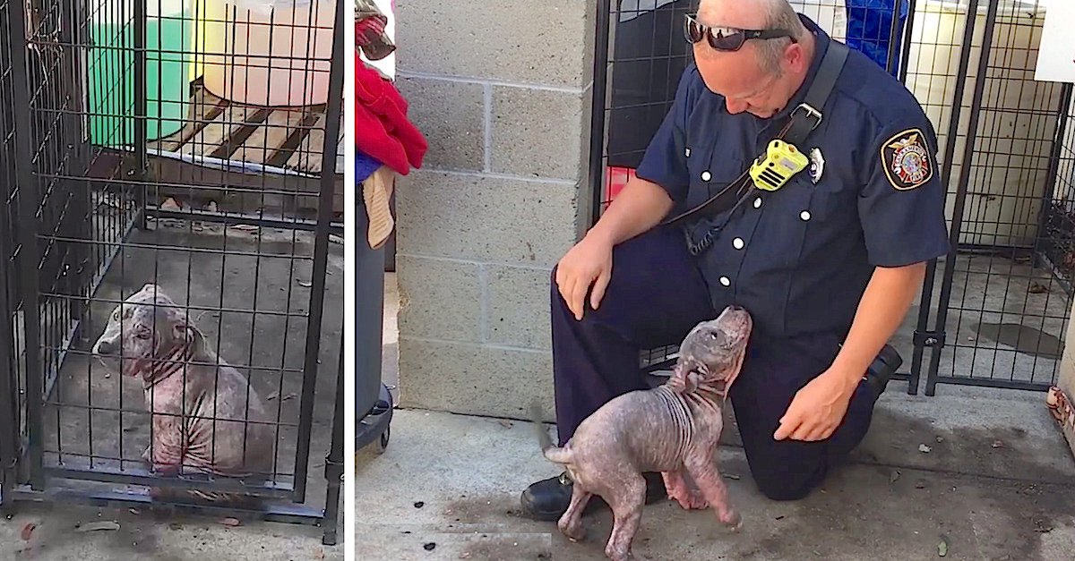 chunkie.jpg?resize=412,232 - Puppy Was Sad At Shelter Until She Saw Firefighter Who Saved Her From Bad Owners