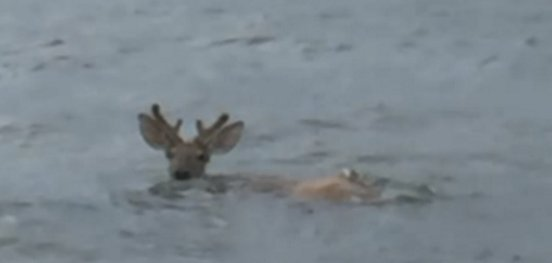 deer feature.png?resize=1200,630 - Fishermen Rescued A Struggling Deer In The Ocean Six Miles Away From The Shore