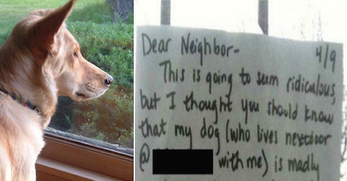 dogg.jpg?resize=412,232 - Dog Who Kept Looking At Neighbor's Cat Left Heartbroken After Neighbor Blocked The View