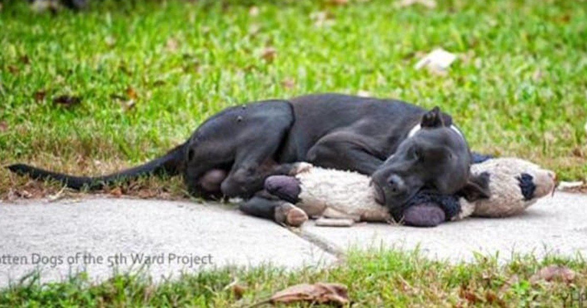 fgsdgsg 1 4.jpg?resize=1200,630 - Homeless Dog Went Viral After People Shared A Picture Of It Sleeping With A Stuffed Animal