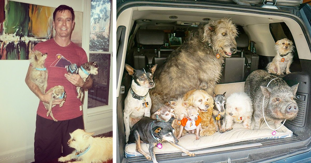 insta.png?resize=1200,630 - Man Opened His Home To Senior Dogs After The Loss Of His Beloved Pet