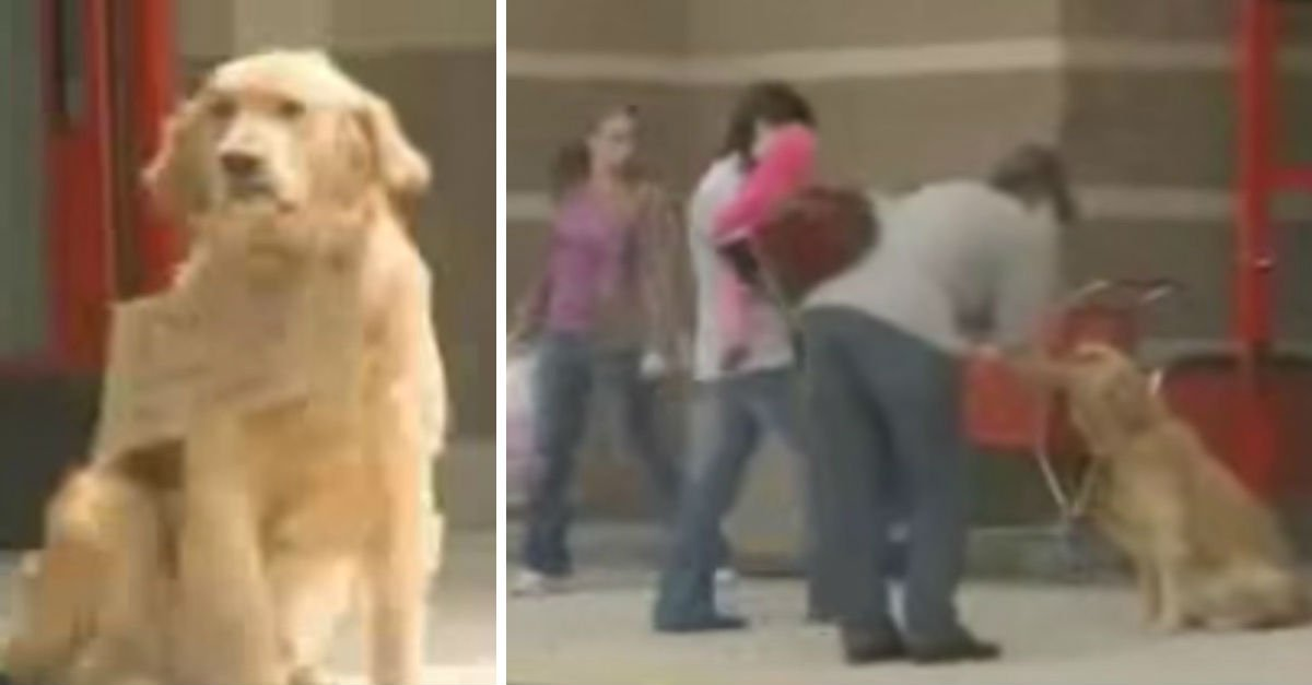 jackson 1p - Shoppers Spot Dog Alone Outside Target, Then See Sign Around His Neck That Reads 'Waiting'