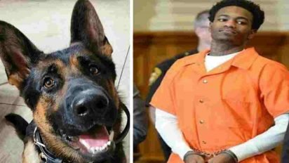 jethro police dog 412x232.jpg?resize=412,232 - Judge Praised After Handing Maximum Sentence To Convict Who Shot Police Dog