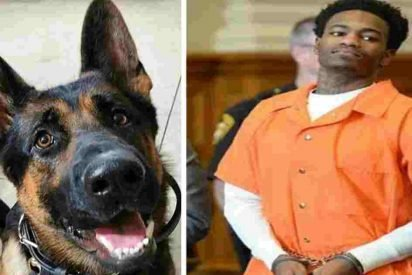 jethro police dog 412x275.jpg?resize=412,275 - Judge Praised After Handing Maximum Sentence To Convict Who Shot Police Dog