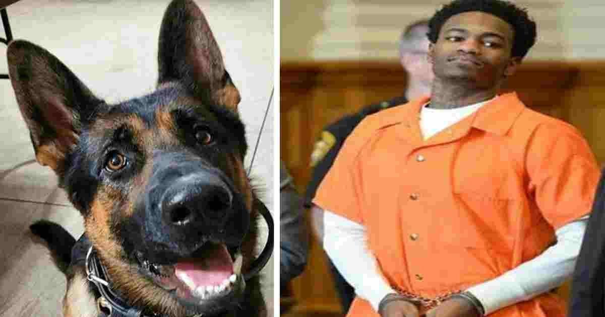 jethro police dog.jpg?resize=1200,630 - Judge Praised After Handing Maximum Sentence To Convict Who Shot Police Dog