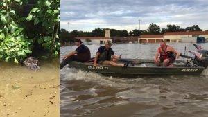 louisiana-rescuers-take-action