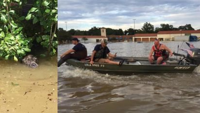 louisiana rescuers take action 412x232.jpg?resize=412,232 - Rescuers Saved Drowning Dog After Spotting Him Catching His Final Breaths