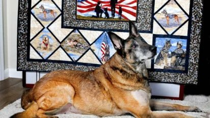 nero feature 412x232.jpg?resize=412,232 - Military Dog Named Nero Received A Hero's Funeral When He Passed Away