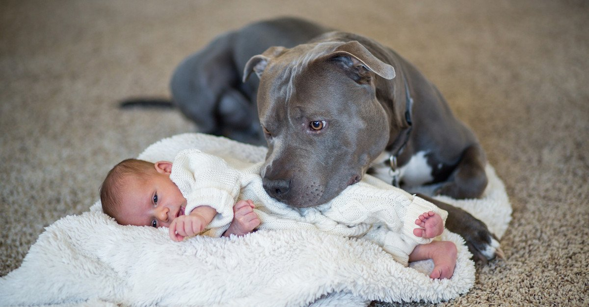 pitbull1.jpg?resize=1200,630 - A Heartwarming Story Of A Sweet Pit Bull And The Little Girl He Loved