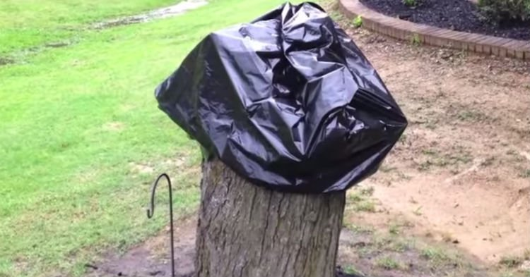 trsum - Wife Is Mad Husband Left Tree Stump Despite Asking Him To Do So. Then He Removes The Bag