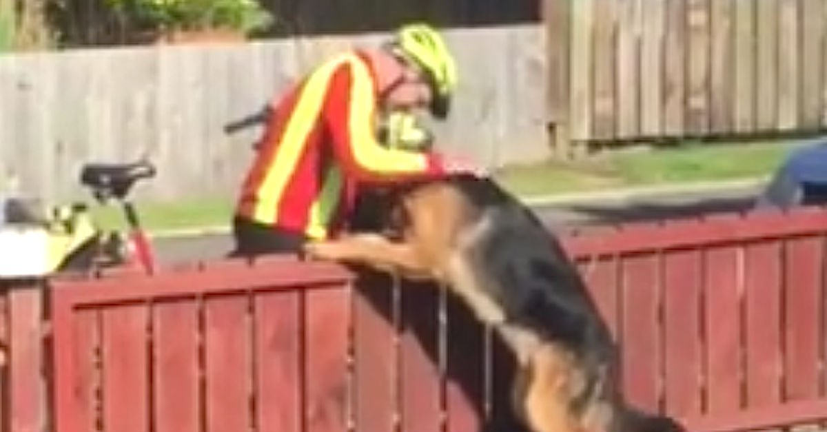 Screen Shot 2016 08 02 at 8.jpg?resize=300,169 - Mailman And German Shepherd Shows Warm Friendship Everyday