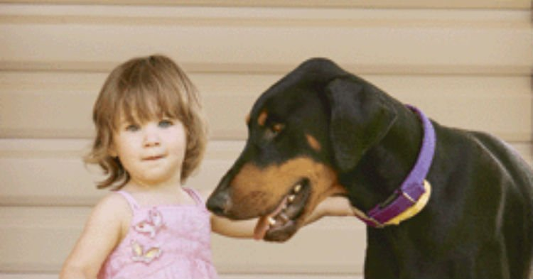 bby 1.jpg?resize=412,232 - Protective Dog Grabbed Toddler And Threw Her Away From Venomous Snake To Save Her Life