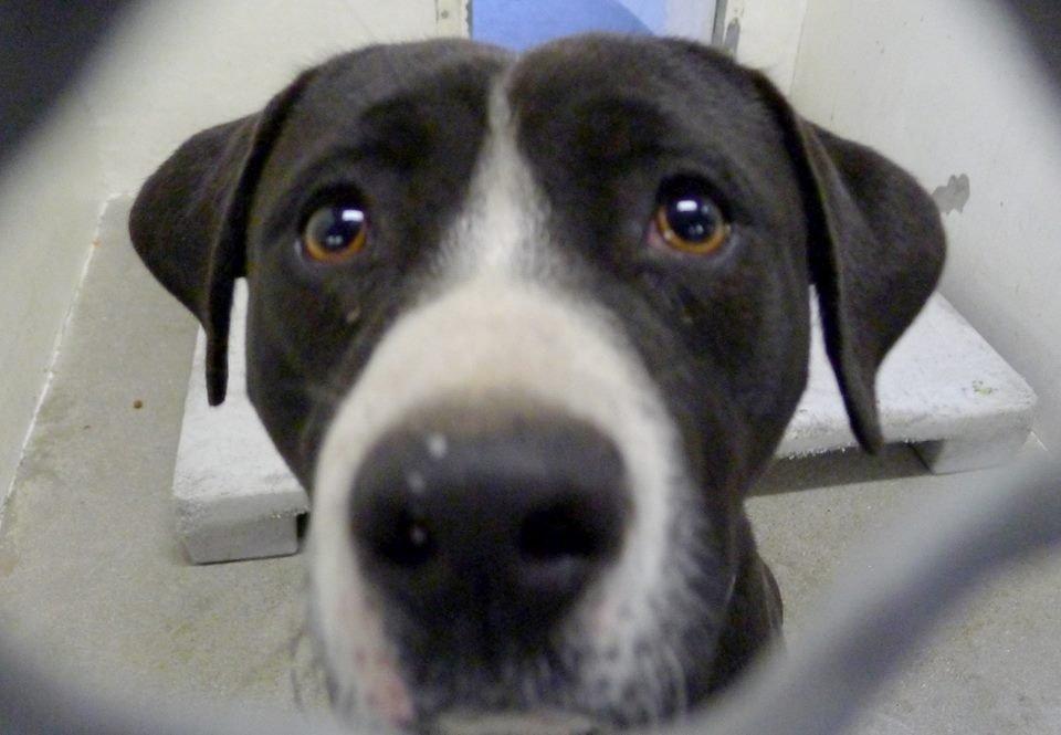 benny-shelter-dog-rescue-2