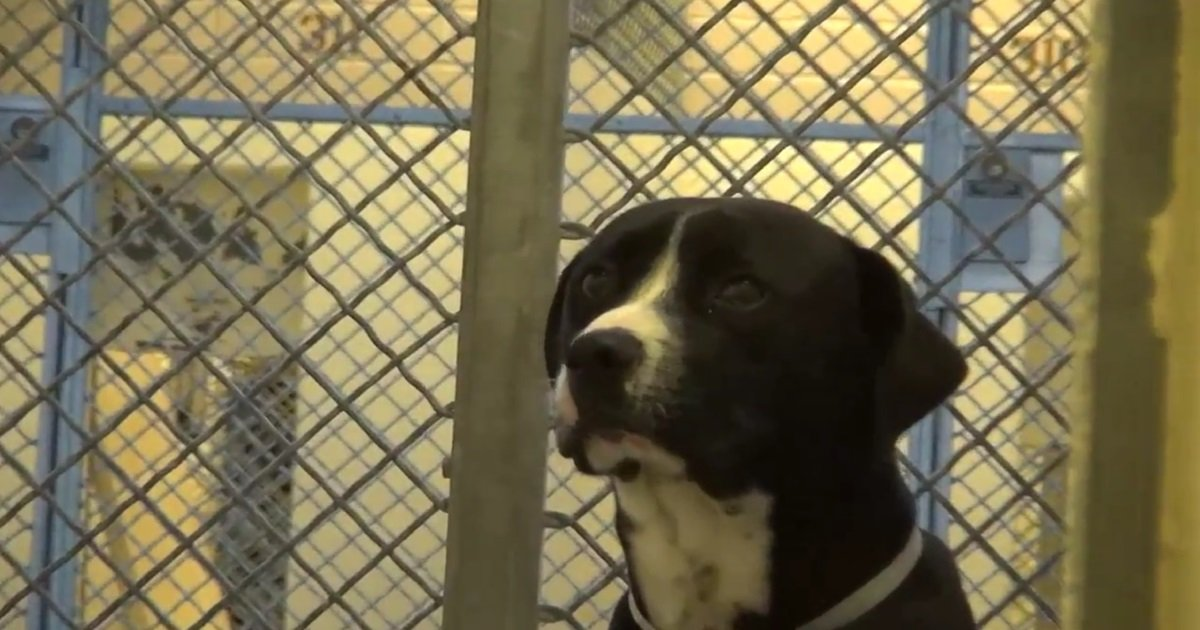 benny shelter dog rescue.jpg?resize=1200,630 - When He Finds Out He's Finally Going Home.. His Excitement Warms My Heart